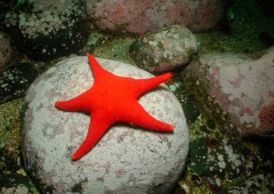Seastar-unidentified